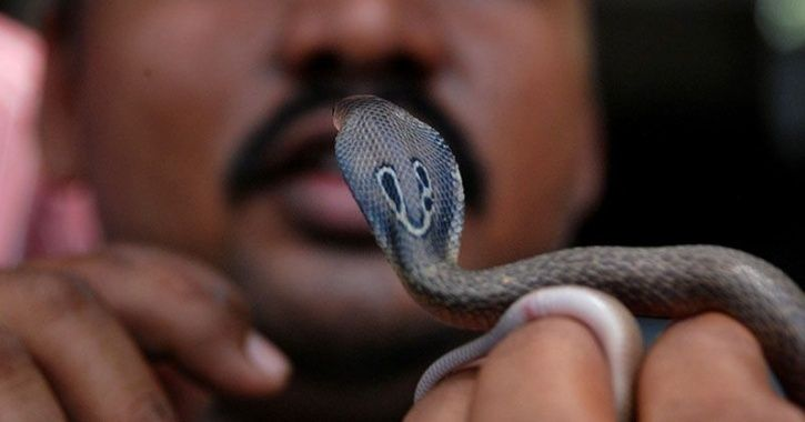Provoked by villagers man eat snake, A 40-year-old drunk man dies after eating alive snake, Heavily drunk man ate live snake, Amroha, Lucknow, Uttar Pradesh news, Regional news, Weird news